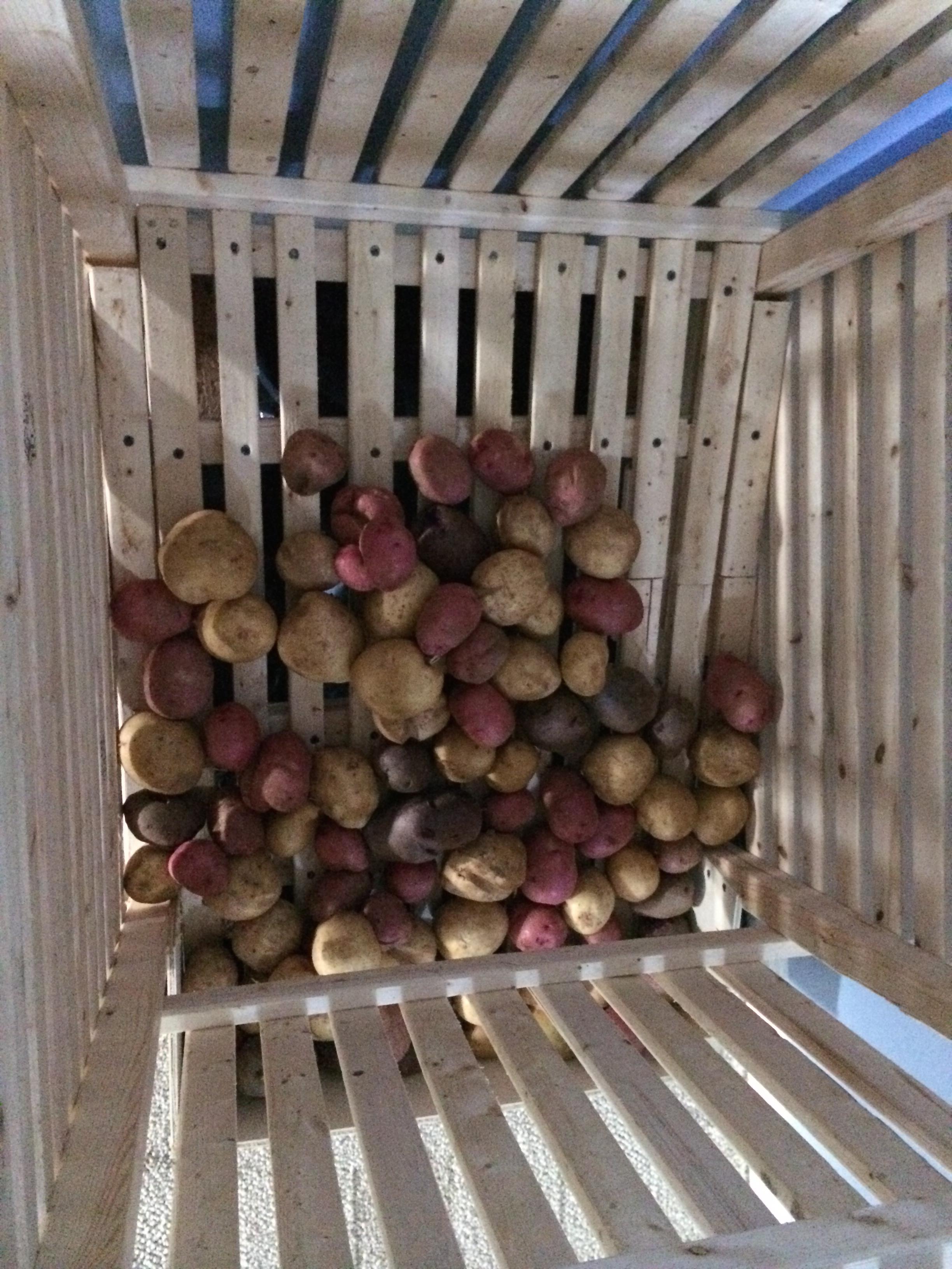 Как правильно хранить картофель?.